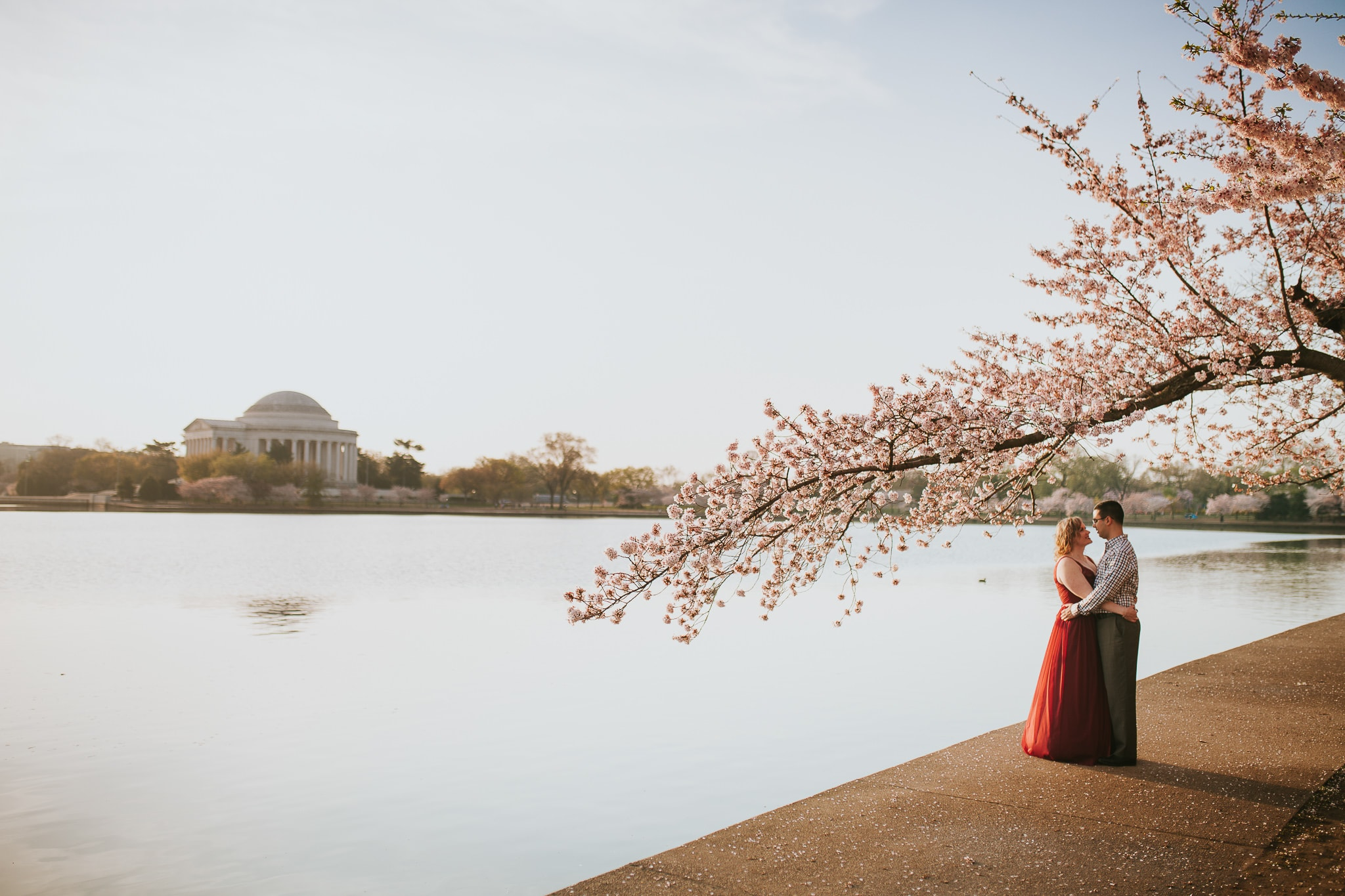 wedding photos in dc cherry blossoms